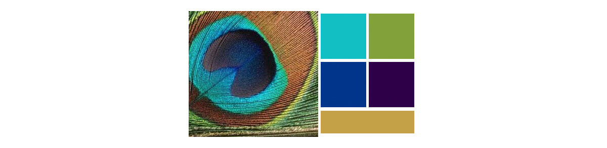 We sampled a few different color pallets, but found a beautiful photo of a Peacock feather. This would make the perfect pallet.