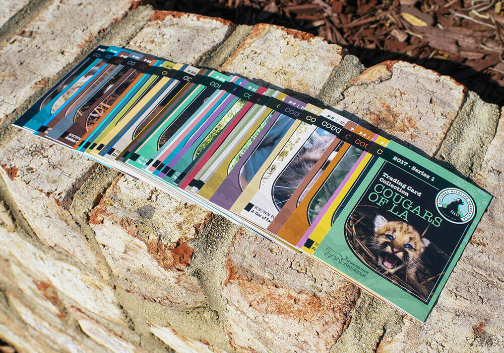 I worked with the National Wildlife Federation on a set of 48 trading cards. These sold as a fundraiser, and the proceeds went to nature overpass construction for cougars living near Hollywood.